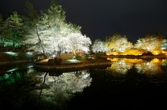 Gyeongju National Park Anap Pond, South Korea