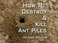 How To Destroy And Kill Ant Piles – An Easy Solution