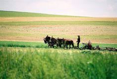 Amish farmer, Lancaster PA