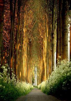 Tree Tunnel, Belgium. This is absolutley breathtaking. #belgium