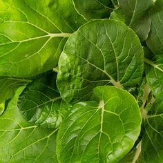 How To Grow Pok Choy? Tips and Tricks | Plantui Smart Garden Big Leaves, Green Leaves, Plant Leaves, Leaf Vegetable, Smart Garden, Small Leaf, Planting Seeds, Growing Plants, Cabbage