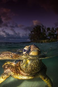 BREATH Photo by Chae Donahue — National Geographic Your Shot