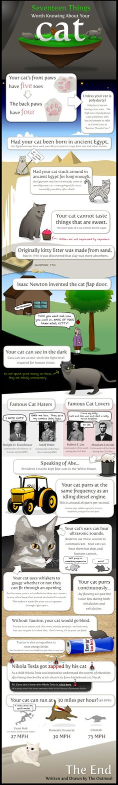 17 things worth knowing about your cat infographic