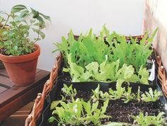 Salatbeete auf dem Balkon ganz einfach © Breckwoldt/ BLV Buchverlag