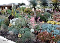 wattle grove succulent garden