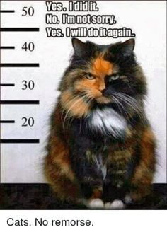 That's a cat for you. No remorse.
