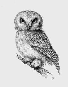 owl by mrsbobetski.deviantart.com on @deviantART