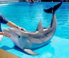 Golfinhos *-*