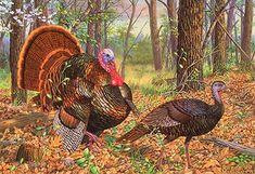 """Beauty And The Feast"" - Wild Turkeys by artist Randy McGovern"