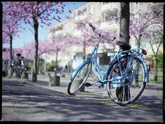 #vintage #ladies #bicycle