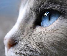 cats blue eyes. Looks like Casey. :)
