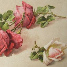 shabby chic rose paintings | Excellent close-up for study of Catherina Klein roses.
