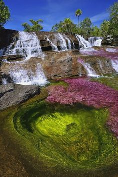 Cano Cristales RIver in the Sierra de la Macarena in Colombia. It has become covered with a bright pink endemic aquatic plant, Macarenia clavigera. (Photo by Olivier Grunewald) Places To Travel, Places To See, Places Around The World, Around The Worlds, Nature Photography, Travel Photography, Colombia South America, Beau Site, Les Cascades