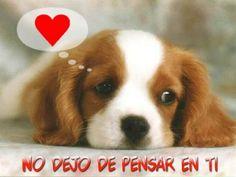 Perrito-20enamorado_1_.jpg (1024×768)