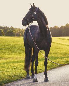 EVERY RIDER HAS THAT ONE SPECIAL HORSE. THAT ONE HORSE THAT CHANGES EVERYTHING ABOUT THEM‼️  Ich bin der Meinung, dass jeder Reiter sein #onceinalifetimehorse hat‼️ Und ich glaube fest daran, dass jeder Reiter dieses wundervolle Gefühl empfinden darf EIN #HERZENSPFERD zu haben. Alleine in Deutschland gibt es ca. 1,3 Millionen Pferde, eine unglaublich große Zahl. Und bei diesen 1,3 Millionen Pferden ist unser #ONCEINALIFETIMEHORSE dabei, faszinierend oder. Ich habe Dylara nicht...