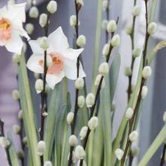 Min Oase – Side 4 – Ny blogg for alle hageglade! Alt om hage, blomster, planter…