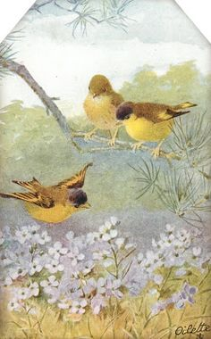 Sweet Birds & Blossoms ~ tag with 3 yellow birds ~ possibly finches ~ above light purple flowers.