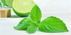 Jak vyrobit meduňkové víno | iStock Lime, Fruit, Food, Limes, Essen, Meals, Yemek, Eten, Key Lime