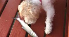 Cão Assusta-se Ao Conhecer Um Peixe Pela Primeira Vez!!!