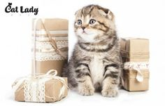 Giveaway: Cat Lady Box