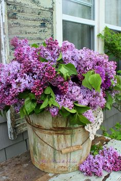 Aiken House & Gardens: The Color Purple ( An old wooden bucket full of lilacs )