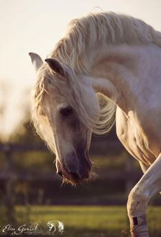 photo by Elise Genest Horse Face, Horse Head, Horse Photos, Horse Pictures, Most Beautiful Animals, Beautiful Horses, Andalusian Horse, Friesian Horse, Arabian Horses