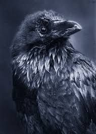 Image result for raven on branch tattoo