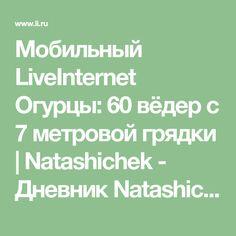 Мобильный LiveInternet Огурцы: 60 вёдер с 7 метровой грядки   Natashichek - Дневник Natashichek  