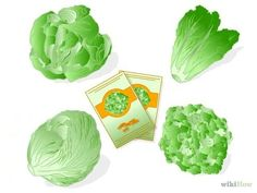 How to Plant Lettuce. Are you a romaine lover, or more of an iceberg person? Regardless of the variety you choose, lettuce is a hardy crop that grows well in most regions. The seeds are started indoors and planted just after the first. Growing Lettuce, Comment Planter, Cabbage, Things To Do, Seeds, Diy Crafts, Vegetables, Ethnic Recipes, Gardens