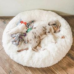 Big Dogs, Large Dogs, Small Dogs, Calming Cat, Fluffy Cushions, Pet Kennels, Cockerspaniel, Bed Mats, Home Decor