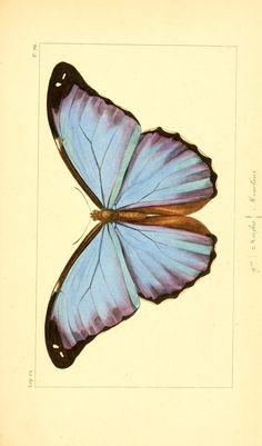 Histoire naturelle des lépidoptères exotiques / - Biodiversity Heritage Library