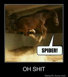 Funny Horse Pictures With Captions #34
