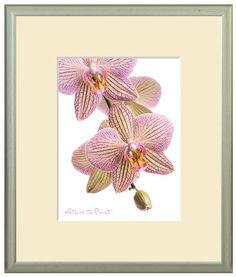 Moderner Blumen-Kunstdruck mit pink-gelber Orchidee.