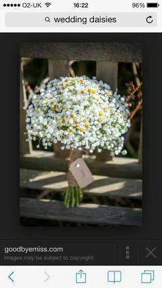 Small daisy matricaria /tanecetum and gyp