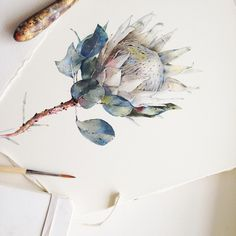 Big white protea is done :) Watercolor illustration Protea Art, Flor Protea, Protea Flower, Watercolor Sketch, Watercolor Illustration, Watercolor Flowers, Watercolor Paintings, Watercolours, Sketch Art