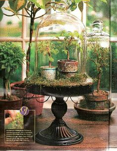 english bell jar