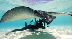 The Underwater World Of Ellen Cuylaerts