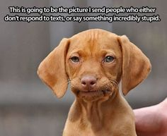 Funny Dogs | Just look at that face! From Fido Friday on Funny Technology - Google+