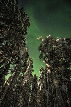 Aurora Borealis; Lapland, Finland.
