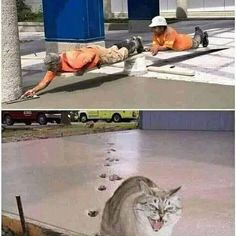 Memes funny lol humor hilarious 62 New Ideas Funny Meme Pictures, Funny Cat Memes, Funny Animal Pictures, Funny Relatable Memes, Funny Images, Funny Animals, Cute Animals, Funny Humor, Memes Humor
