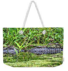 #gatorbahs #alligators #gatorbabies #weekendertotebags