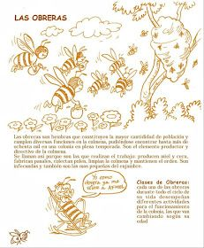 La Familia de la Apicultura - The Beekeeping of Family: Manual Apícola Ilustrado - Beekeeping Illustrated Manual. Drone Bee, Beekeeping For Beginners, Raising Bees, Bee Boxes, Bee Farm, Golden Honey, Royal Jelly, Places In Europe, Queen Bees