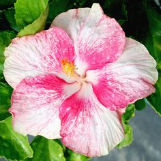 hibiscus flower clips for hair
