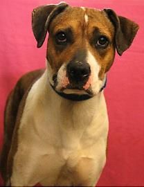 Available for Adoption...Lily - Westhampton