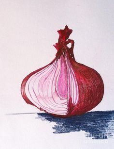 Red Onion Drawing  - Red Onion Fine Art Print