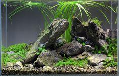 36 Liter Aquascape after 2 Week