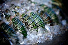 Andaman Lobster by RichardForrest1