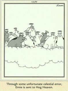"""The Far Side"" by Gary Larson. Gary Larson Comics, Gary Larson Cartoons, Far Side Cartoons, Far Side Comics, Cartoon Jokes, Funny Cartoons, Cartoon Fun, Cartoon Cats, Gary Larson Far Side"