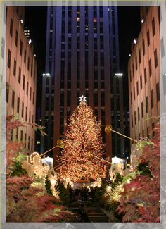 Christmas Tree at Rockefeller Center - a MUST see this Holiday Season in NYC