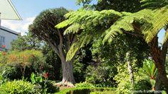 Top places to visit in Tenerife: Hijuela del Botánico en La Orotava